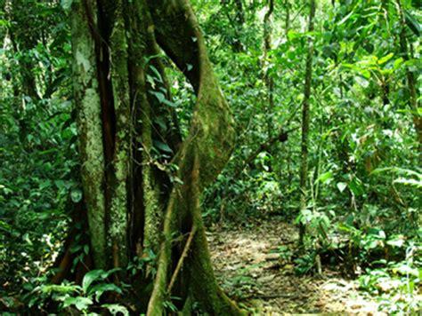 la selva de sara el cambio clim 225 tico y el futuro de la selva marcianitos verdes