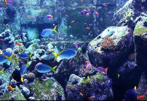 free screensavers aquarium screensaver search engine at search