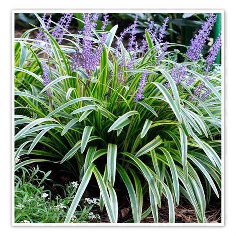 Japanischer Garten Pflanzen 352 by 352 Besten Gartenideen Pflanzen Bilder Auf