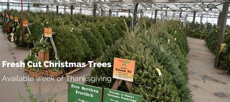 chuck hafners christmas trees fresh cut trees chuck hafner s farmers market garden center syracuse ny