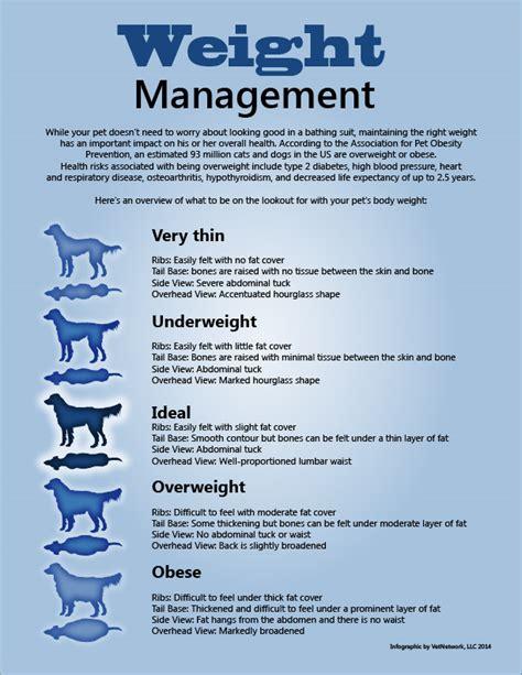 weight management articles 2016 holistic health holistic health jacksonville fl
