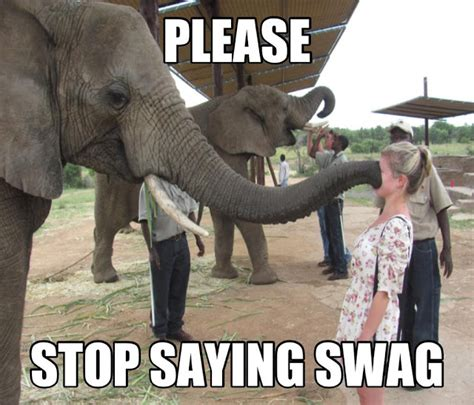 Funny Meme Captions - 30 funny animal captions part 8 30 pics amazing