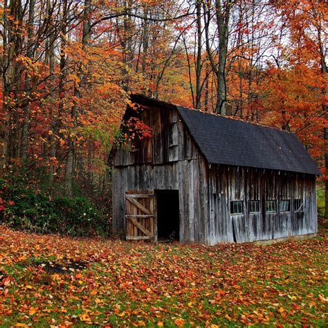wallpaper autumn cabin in the wood hd wallpapers