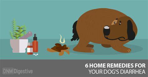 dog   case   runs   dogs