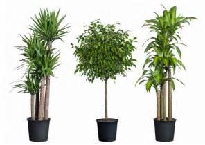 How to grow tropical plants indoors diy home decor