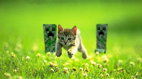 imagenes wallpapers gatos gatos 1366x768 fondos de pantalla y wallpapers