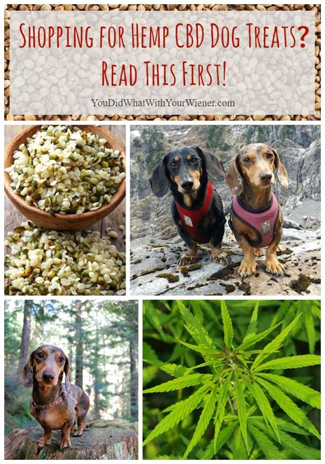 hemp for dogs shopping for hemp cbd treats read this