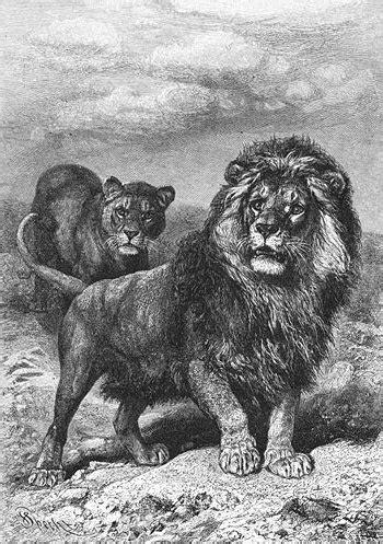 coluche wikiquote lion wikiquote le recueil de citations libres