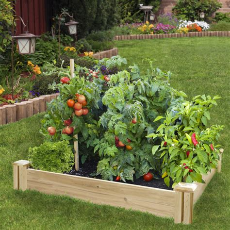 best soil for vegetable garden in raised bed growing tomatoes in raised beds