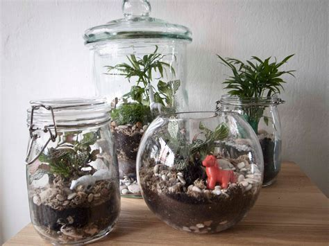 how to make a terrarium a step by step diy tutorial