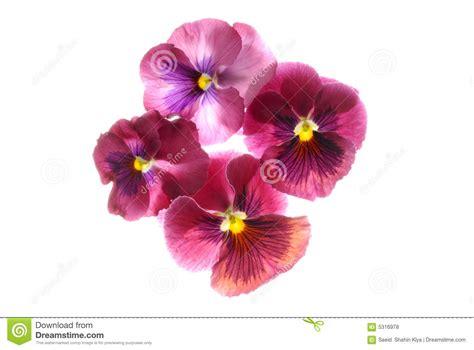 foto di fiori esotici fiori esotici fotografie stock libere da diritti
