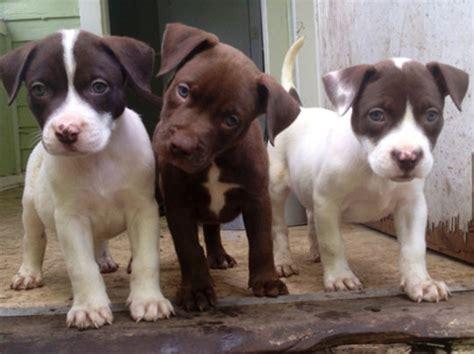 villalobos puppies photos from villalobos rescue center globalgiving