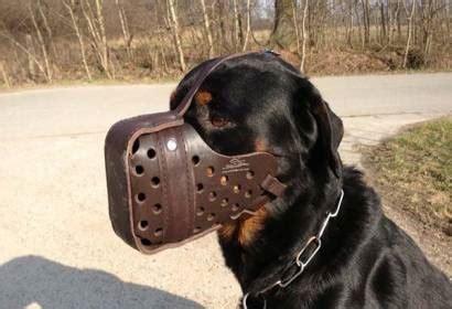 rottweiler puebla multas de hasta 350 mil por sacar a pasear un rottweiler o pitt bull bozal en puebla