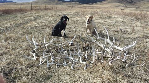How To A To Shed Hunt by Shed Tips Raised