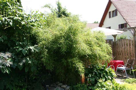 bambus le sonderangebot bambus phyllostachys bissetii 10 liter pictures