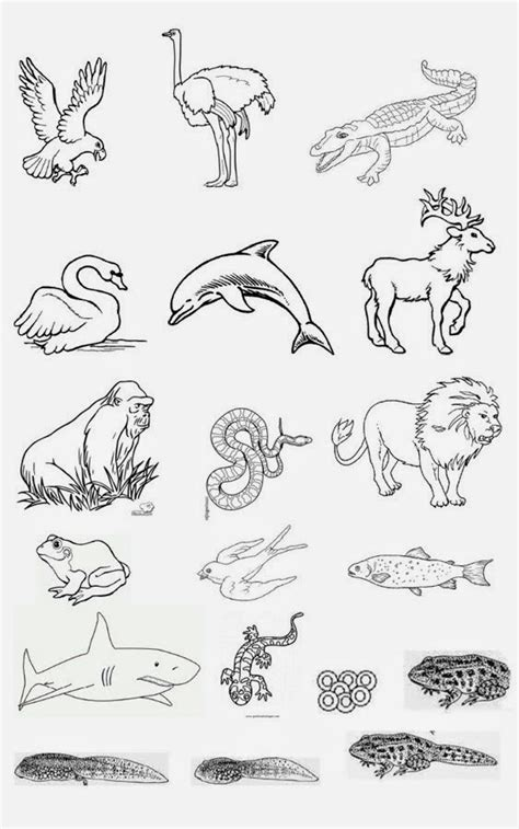 imagenes de animales invertebrados para dibujar maestraescuela conocimiento del medio los animales