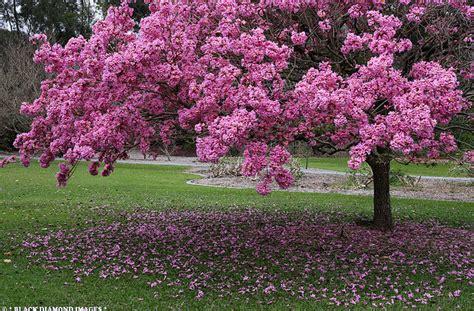 imagenes de flores y arboles imagenes de arboles y flores imagui