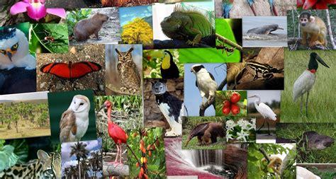 la fauna pictures m 233 xico y eeuu se unen por la conservaci 243 n de la fauna expoknews