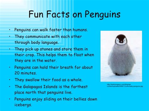 animal facts penguins