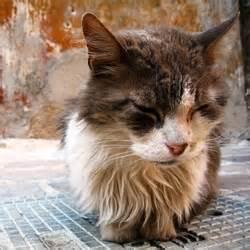 savoir reconna 238 tre la douleur chez le chat vous le savez