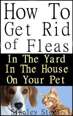 how to get rid of fleas on newborn puppies 2739 best images about animals on chihuahuas and poodles