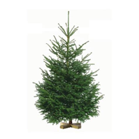 trees at ikea ikea ikea buy a tree for 20 and receive a