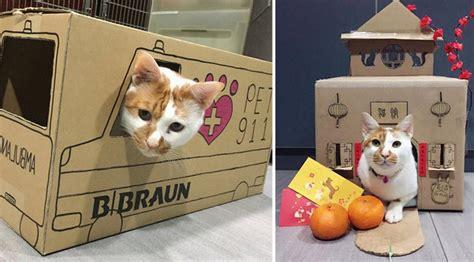 membuat rumah kucing dari kardus bekas kreatif petugas klinik buat rumah kucing dari kardus bekas