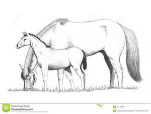 Pencil Drawing Of A Mother Horse Feeding With Her Foal Standing By  sketch template