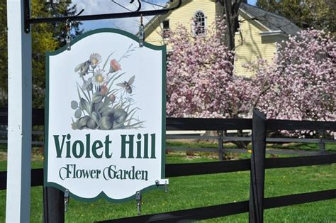 violet hill bed and breakfast violet hill bed and breakfast updated 2017 guesthouse reviews middletown ny