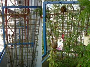 Cabana Weidenwelt Blog Tagebuch Weidenbau
