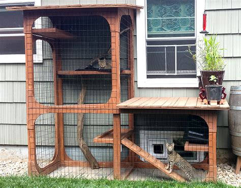 cat patio all about catios animal sheltering online by the humane