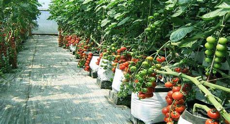 balitsa lembang review balai penelitian tanaman sayuran