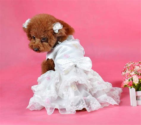 puppy clothes wedding dress band puppy dress clothing pet elegance white small skirt with