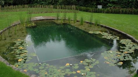 Backyard Pond Pool Diy Swimming Pool Construction Backyard Design Ideas