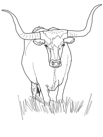 Texas Longhorn Cattle coloring page | SuperColoring.com
