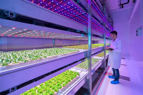 city farming a how to guide to growing crops and raising livestock in spaces books philips new growwise indoor farm will revolutionize food