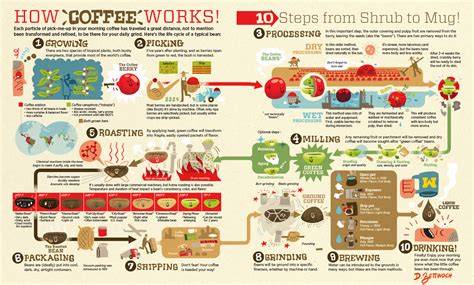 From beans to liquid, the coffee process
