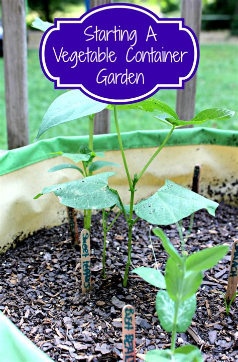 starting a container garden how to start a container vegetable garden makobi scribe