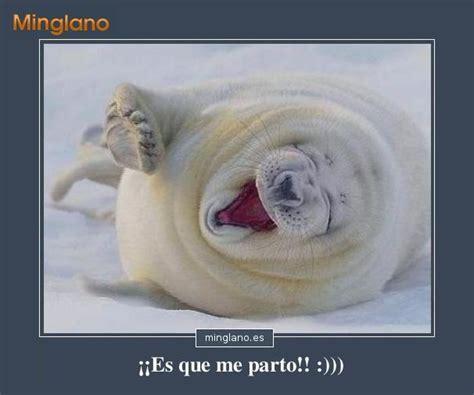 imagenes de animales graciosas con frases fotos con frases graciosas fotos graciosas de animales