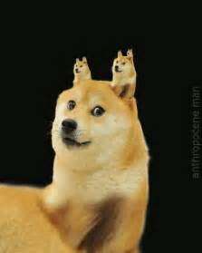 Douge Meme - doge shibe gifs find share on giphy