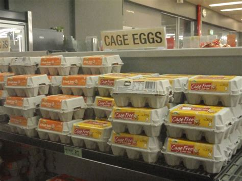 why are eggs in the dairy section aussie egg mystery solved by the seat of my skirt