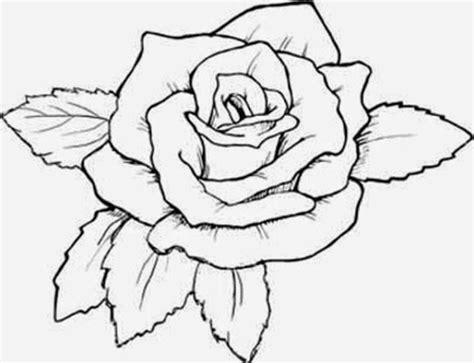 coloring page for rose flowers coloring pages rose many flowers