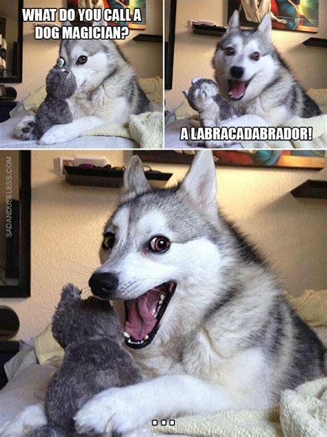 Dog Pun Meme - pun dog