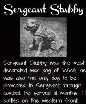 Sgt Stubby Breed Armistice Day 11 11 Doggies