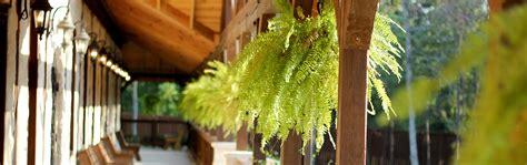 felce d appartamento piante da appartamento la felce coltivazione e cura