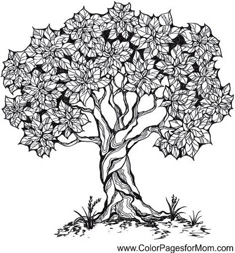 17 Best Images About Mandala On Pinterest Ocean Coloring Tree Coloring Page For Adults