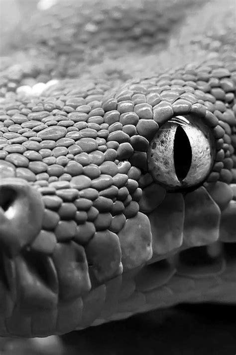 Épinglé par Yaire sur Snek | Photographie Animalière