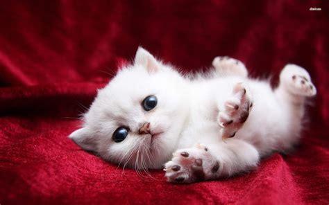 Cute Cats and Kittens Wallpaper   WallpaperSafari