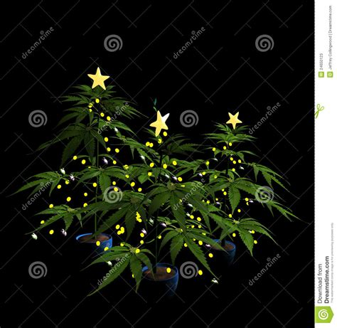 marijuana christmas tree pics decorated marijuana trees stock photos image 24650123