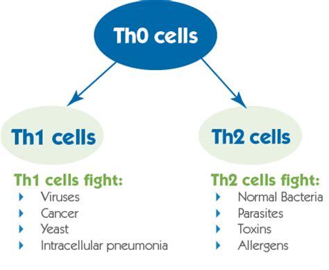 innate immunity a question of balance ora explaining immune dysfunction syndromes